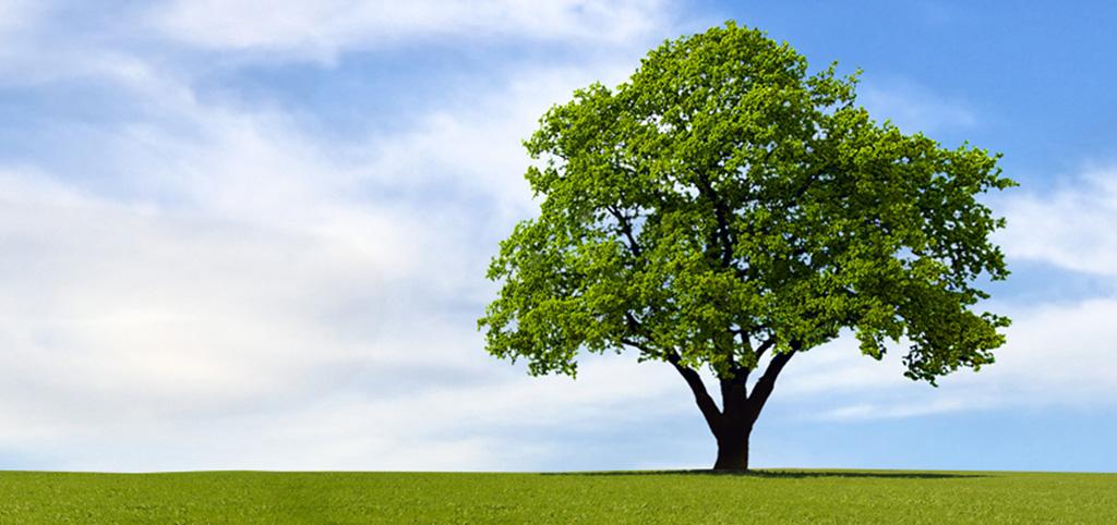 از درختان چه میدانید؟-آگاهی مصرف-درست مصرف کنیم-آموزش همگانی
