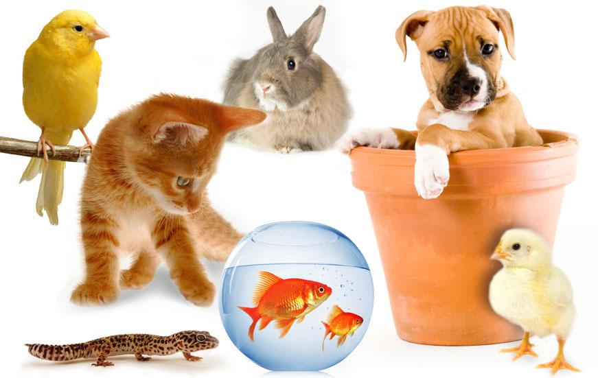 نکات مهم درباره نگهداری حیوانات خانگی-درست مصرف کنیم - آموزش همگانی - آگاهی مصرف