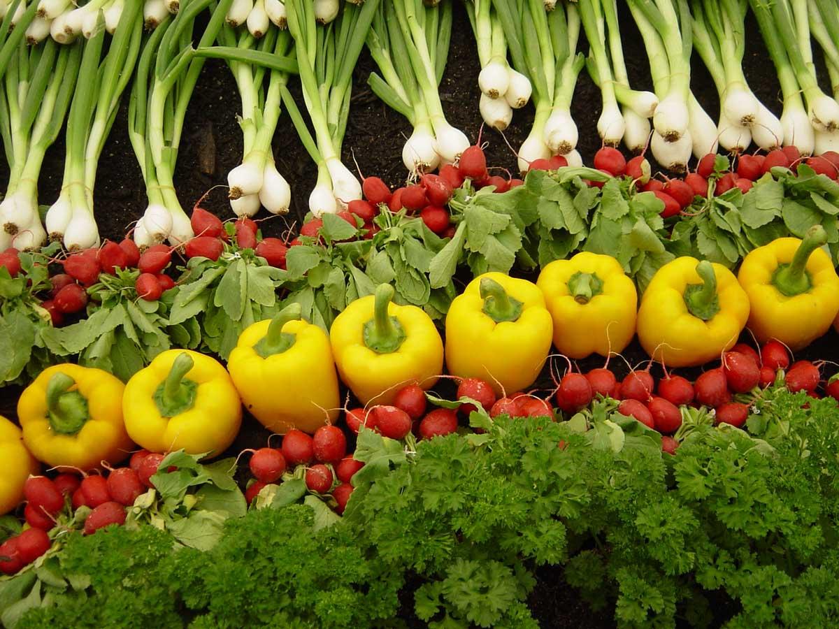 مزایای محصولات کشاورزی زیستی(ارگانیک)- پایگاه اینترنتی دانستنی در ایران
