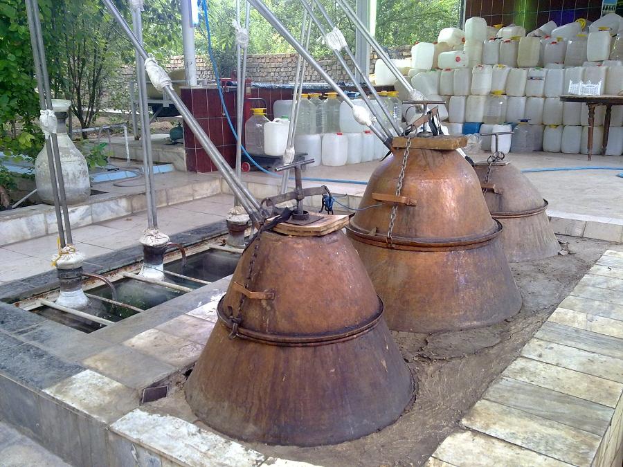 خواص عرقیات گیاهی و نحوه مصرف آن ها (3)- پایگاه اینترنتی دانستنی در ایران