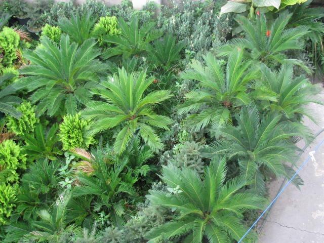 نکات کلیدی برای پرورش گیاهان آپارتمانی- پایگاه اینترنتی دانستنی ایران