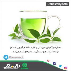 چای سبز - پایگاه اینترنتی دانستنی در ایران