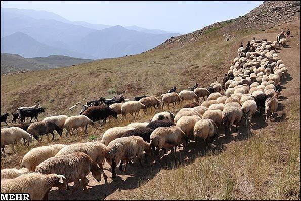 چگونه از مراتع محافظت کنیم؟- پایگاه اینترنتی دانستنی ایران