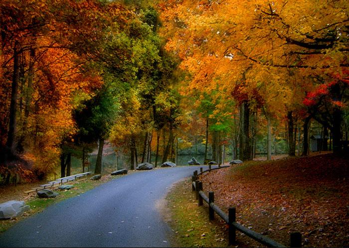 توصیه های تغذیه ای و بهداشتی برای فصل پاییز (1)- پایگاه اینترنتی دانستنی ایران