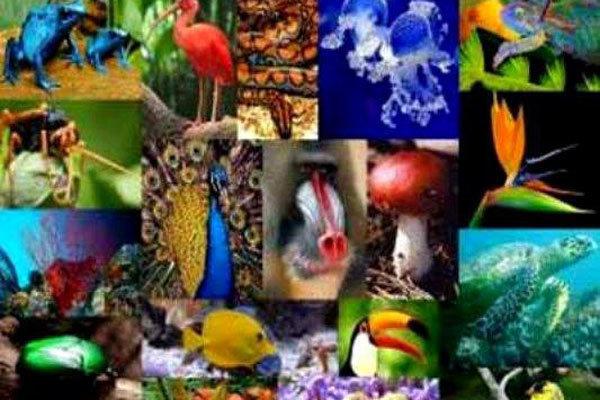 بقای انسان در گرو بقای تنوع زیستی + اینفوگرافیک- پایگاه دانستنی آنلاین