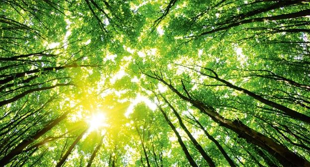 حفظ محیط زیست با روش های ساده- پایگاه دانستنی آنلاین
