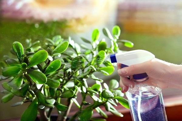 آشنایی با بیماری ها و رایج ترین آفت های گیاهان آپارتمانی و روش معالجه آن ها