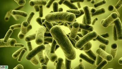پروبيوتيك چيست و چه تأثیری در سلامت انسان دارد ؟
