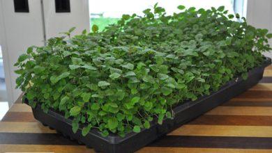 آموزش کاشت سبزیجات در آپارتمان + ویدئو