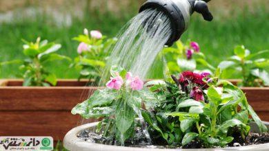 نحوه آبیاری گیاهان زینتی آپارتمانی + ویدئو