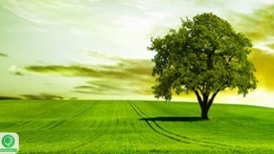 دولت رفتار مسئولانه با محیط زیست را از خود شروع کند