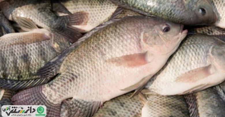 ممنوعیت واردات ماهی تیلاپیا +سند