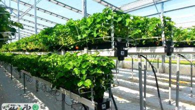 گلخانه هیدروپونیک چیست ؟