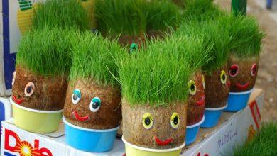 مناسب ترین زمان کاشت و پرورش سبزه انواع بذرها برای عید +اینفوگرافیک