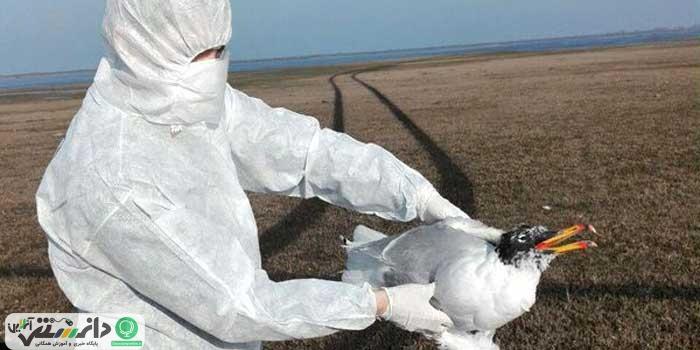 ورود آنفلوآنزای پرندگان قابل انتقال به انسان به کشور