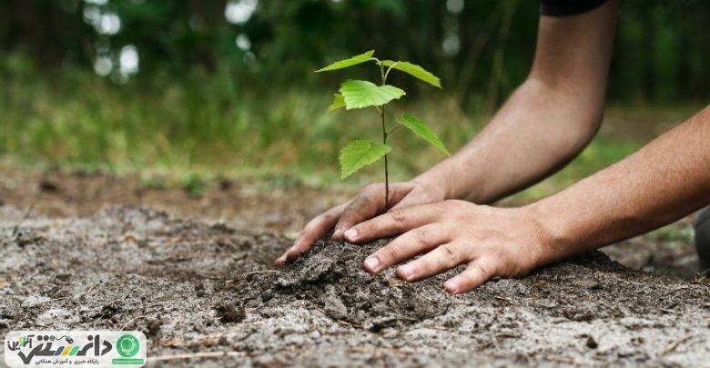 چرا در روز درختکاری هر فرد باید یک درخت بکارد
