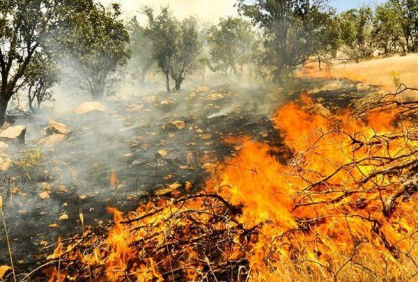 """""""شیشههای"""" رها شده در طبیعت چگونه باعث آتشسوزی جنگل میشوند"""