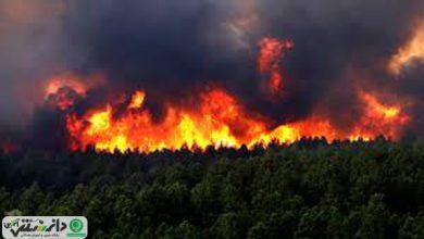 هشدار درباره حریق جنگلها با شروع فصل گرما
