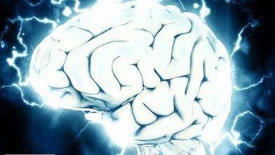 دلایل پیچیدگی مغز انسان