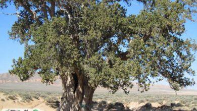 ارتباط بین نوع درختان در شهرها و خنک بودن تابستان