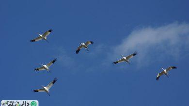 هم صدا با هم برای حفاظت از پرنده
