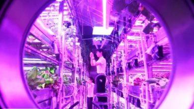 آزمایش یک ساله زندگی در ماه، توسط دانشجویان چینی تکمیل شد