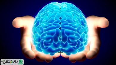 ۷ نکته دانستنی و جذاب که در مورد مغز باید بدانید