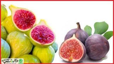 خواص و فواید میوه بهشتی انجیر +ویدئو