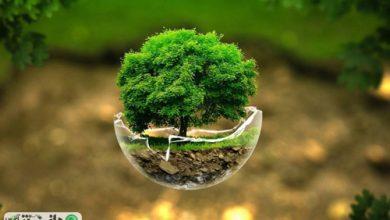 تحقیقات زیست محیطی کاربردی می شوند