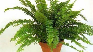 بهترین گیاهان آپارتمانی تصفیه کننده هوا +اینفوگرافیک