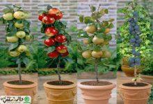 پرورش درختان میوه در گلدان