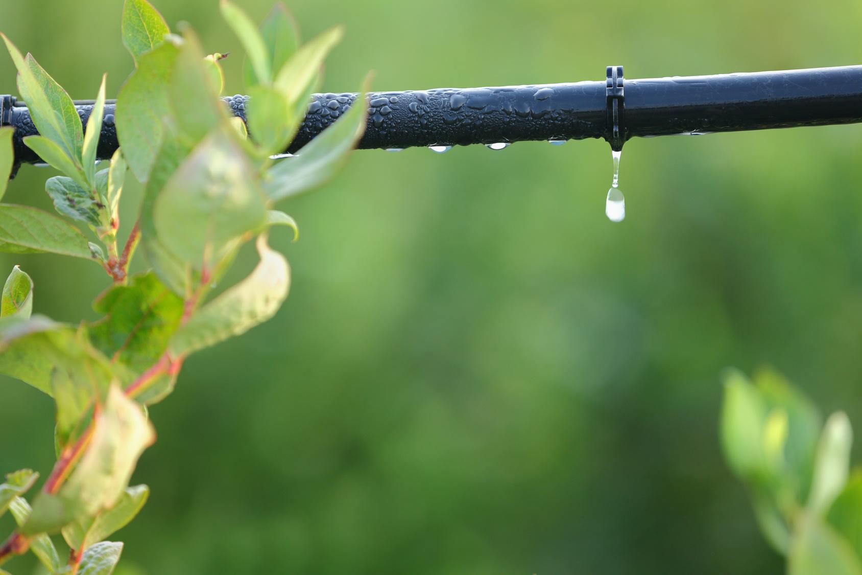 اصلاح الگوی مصرف آب در بخش کشاورزی-درست مصرف کنیم - آموزش همگانی - آگاهی مصرف