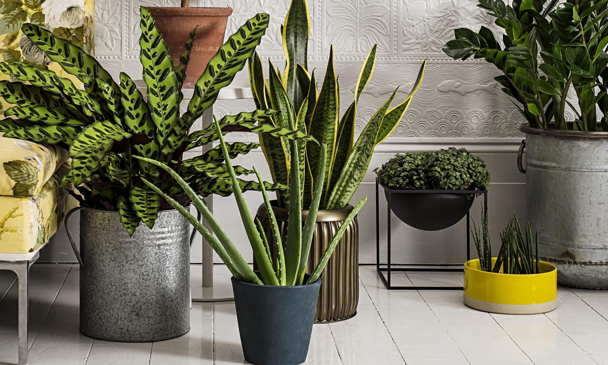مراقبت از گیاهان آپارتمانی-درست مصرف کنیم - آموزش همگانی - آگاهی مصرف