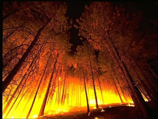 علل آتش سوزی در جنگل ها+ویدئو- پایگاه اینترنتی دانستنی ایران