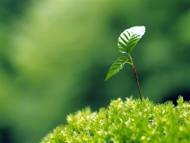نجات زمین با درختکاری + اینفوگرافیک- پایگاه دانستنی آنلاین