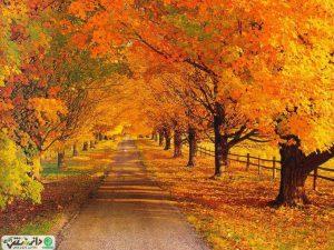 تدابیر بهداشتی و سلامتی برای فصل پاییز از نظر طب سنتی