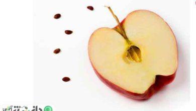 مراقب ماده سمی سیانید هسته سیب باشید