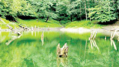 دیدار دو دریاچه در قلب جنگل