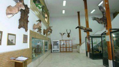 ساعت کار و نحوه بازدید از موزهها در ایام نوروز