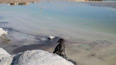 انتقاد شدید کلانتری از وزارتخانههای مسوول در احیای دریاچه ارومیه