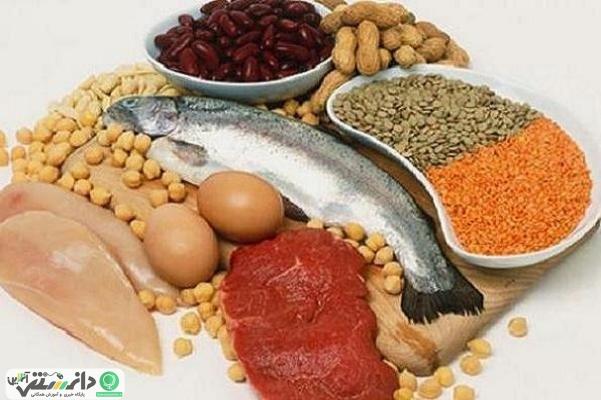 مصرف پروتئین بیشتر برای سلامت استخوان ها مفید است