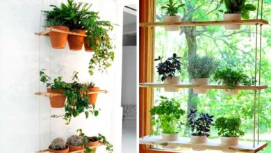 هفت اشتباه در پرورش گیاهان آپارتمانی