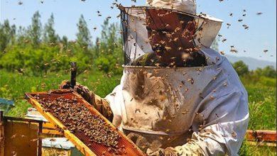 کارآفرین زنبوردار: با زنبورداری میلیونر شوید