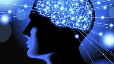 آیا می دانید مغز چگونه کار می کند؟ +ویدئو