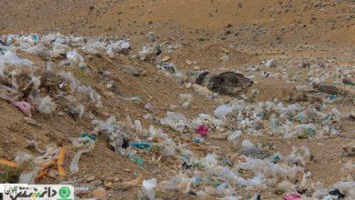 پلاستیک بلای جان محیط زیست +ویدئو