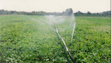 موفقیت در کسب و کار حوزه کشاورزی +ویدئو