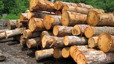 میزان درختهای قطع شده برای چاپ هر روزنامه