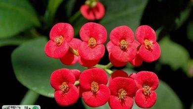 آموزش تکثیر و نگهداری گل های آپارتمانی مرجان و زاموفیلیا +ویدئو